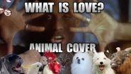 Смотреть онлайн Музыкальная песня созданная из звуков животных