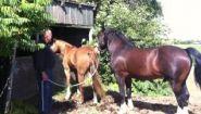 Смотреть онлайн Секс лошади и коня: как выглядит