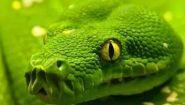 Смотреть онлайн Документальный фильм про разных змей
