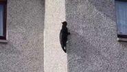 Смотреть онлайн Кот, который умеет ходить по стене