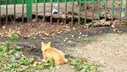 Смотреть онлайн Кот ловко поймал мышку