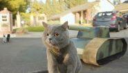 Смотреть онлайн Если бы коты умели думать, то было бы так
