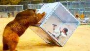 Смотреть онлайн Подборка: Животные хотят напасть на людей в зоопарке