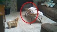 Смотреть онлайн Животные, которые видели привидений