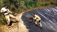 Смотреть онлайн Спасатели вытащили лисиц из искусственного водоема