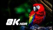 Смотреть онлайн Демонстрационный ролик для мониторов 8К