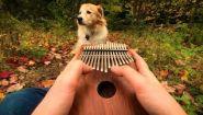 Смотреть онлайн Собака очень любит слушать живую музыку