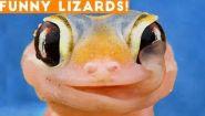 Смотреть онлайн Подборка приколов про ящериц