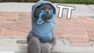 Смотреть онлайн Если бы коты жили как люди и вели себя так же