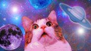 Курьезная подборка с мемами про котов - Видео онлайн