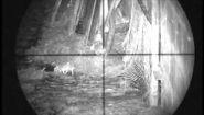 Охота на крыс с прицелом и пневматическим ружьем - Видео онлайн