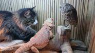 Смотреть онлайн Как проводят время кот, сова и ящерица в аквариуме