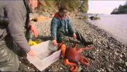 Документальный фильм про осьминогов - Видео онлайн
