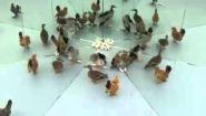 Смотреть онлайн Животным и птицам показали зазеркалье