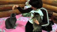 Смотреть онлайн Кот ревнует, что его хозяйка гладит другого