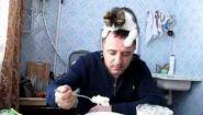 Смотреть онлайн Кот облизывает голову хозяина, чтобы он дал мясо