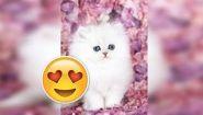 Смотреть онлайн Подборка реакций: Детям дарят котенка