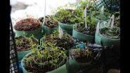 Смотреть онлайн Что можно посадить в феврале для сада и огорода