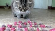 Смотреть онлайн Что вкуснее для котов: сырое или вареное мясо