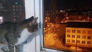 Смотреть онлайн Кот боится смотреть новогодние салюты