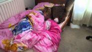 Смотреть онлайн Кот пришел будить девочку утром