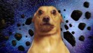 Смотреть онлайн Фантастический ролик с собакой
