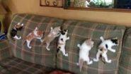 Смотреть онлайн Подборка: Странное поведение кошек