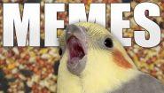 Смотреть онлайн Подборка приколов про попугаев