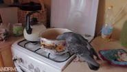Смотреть онлайн Голубь залез в квартиру и поел там гречки