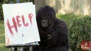 Смотреть онлайн Розыгрыши с гориллой