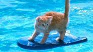 Смотреть онлайн Подборка: Прикольные животные в бассейне