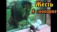 Смотреть онлайн Животные в зоопарке пытаются напасть на людей