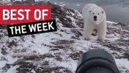 Самое необычное, что произошло на прошлой неделе - Видео онлайн
