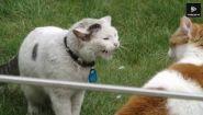 Смотреть онлайн Подборка: Драки котов до крови