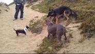 Смотреть онлайн Подборка: Собаки нападают на людей