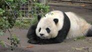 Смотреть онлайн Как выглядит зоопарк в Сан-Диего (США)