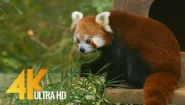 Смотреть онлайн Зоопарк со зверями для детей