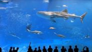 Смотреть онлайн Что можно увидеть в океанариуме