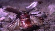 Смотреть онлайн Как взлетают разные насекомые