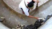 Смотреть онлайн Как чистят зоопарк его работники