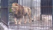 Смотреть онлайн Зоопарк в Китае (Гуанджоу)