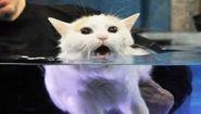Смотреть онлайн Подборка: Коты ненавидят воду