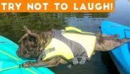 Смотреть онлайн Приколы: Неудачный день у домашних животных