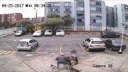 Смотреть онлайн Питбуль нападает на хаски