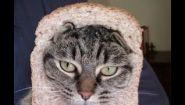 Смотреть онлайн Подборка: коты совершают глупые поступки