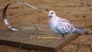 Как создать ловушку для птиц, инструкция - Видео онлайн