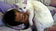 Смотреть онлайн Подборка: Коты будят по утрам своих хозяев